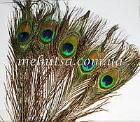 "Перо павлина, размер ""глаза""  4,5 х 3 см,  длина 25-30 см"
