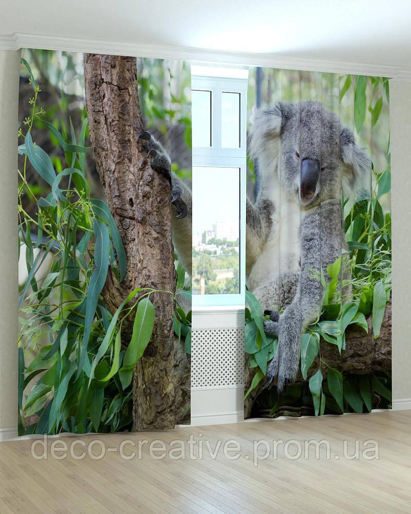 Фотошторы коала на дереве