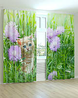 Фотошторы котенок в траве