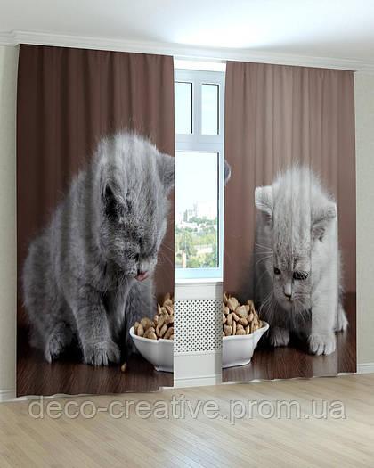 Фотошторы милые котята