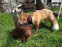 Композиция «Лиса и фазан»