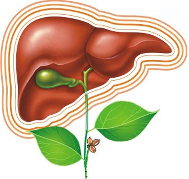 Гепатолептин - здоровая печень