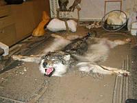 Ковровый волк