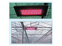 Применение светильников LED Grow. Отзыв