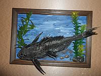 Картина с чучелом рыбы