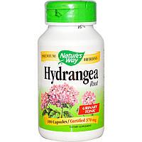 Hydrangea (корінь гортензії), захворювання нирок,сечового міхура