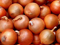 Семена лука Штутгартер Ризен, 0,5кг