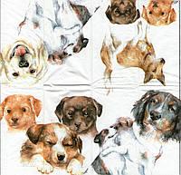Салфетка для декупажа, 21х21см,  Собаки