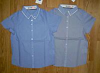 Рубашки на мальчика оптом, Glo-story, 98, 104р