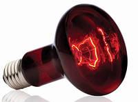 Лампа террариумная инфракрасная EXO-TERRA HEAT GLO, 150 Вт