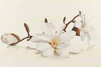 Декор Flora магнолія 30x45