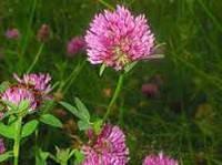 Клевер цветы и трава, 50 г ЦРК