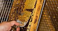 Забрус пчелиный