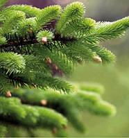 Мікродобриво для лісових насаджень