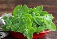 Гидролат Мяты. Изготавливается из свежих листьев и цветов перечной мяты.