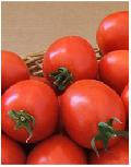Купить семена Томат Лидия F1 (1000 семян)