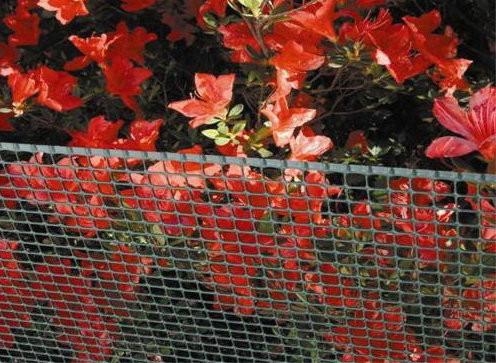 Сетка полимерная для декоративной ограды «Тенакс Квадра» 1х50.