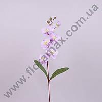 Цветок Фаленопсис 23053
