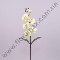 Цветок Фаленопсис 23057