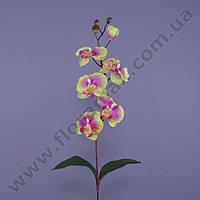 Цветок Фаленопсис 23087