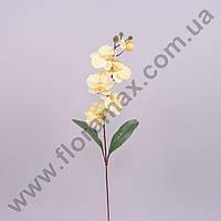 Цветок Фаленопсис 23089
