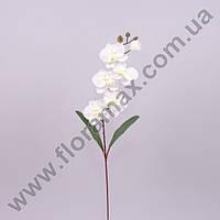Цветок Фаленопсис 23090