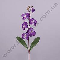 Цветок Фаленопсис 23052