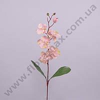 Цветок Фаленопсис 23029