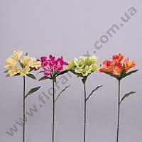 Цветок Альстромерия 23100