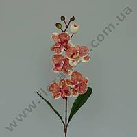 Цветок Фаленопсис 23050