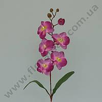 Цветок Фаленопсис 23097