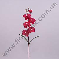 Цветок Фаленопсис 23047