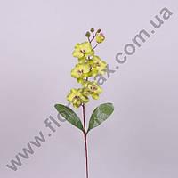 Цветок Фаленопсис 23048