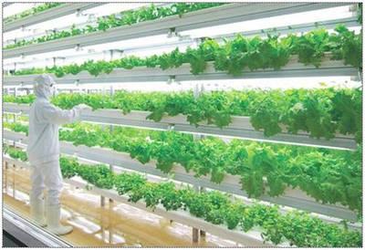 ФЕРМЕРСКИЙ РАЗДЕЛ. Автоматизация, полив, LED освещение, современные методы выращивания растений