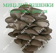 Мицелий Вешанки на палочках 20 шт