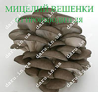 Мицелий Вешенки на палочках для древесины, пней, фото 1