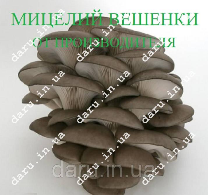 Мицелий Вешанки на палочках 20 шт, фото 1