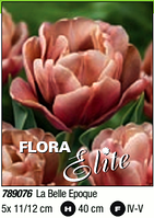 Tulipa Double Early La Belle Epoque 789076