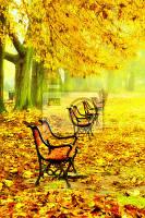 "Картина по номерам ""Ряд скамеек осенью"""