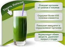 Живая Хлорелла «Био Энергия» 1 л.  Для восстановления здоровья человека