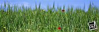 Постер глянцевый - Поле пшеницы, 185x60см