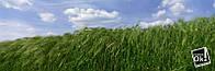 Постер глянцевый - Поле пшеницы, 183x60см
