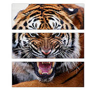 """Модульная картина  """"Тигра"""""""