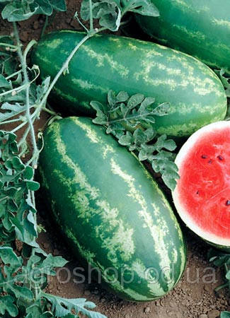 Семена арбуза  Маджестик 0,5кг