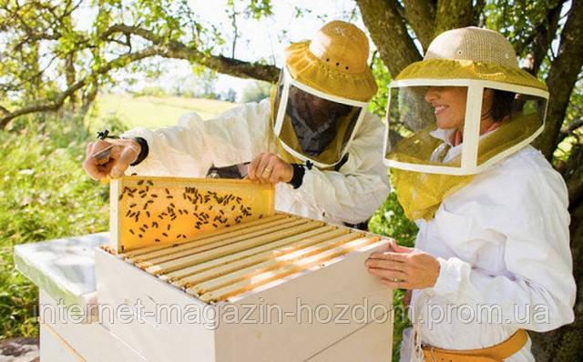 Содержание пчел.