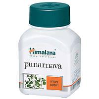 Пунарнава (Himalaya)