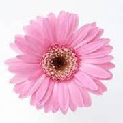 Головы, насадки цветов