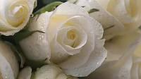 Отдушка Белая роза10 мл