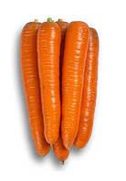 Семена моркови Морелия F1 25000 семян (калиброванные 1,4 - 1,6мм.) Rijk Zwaan