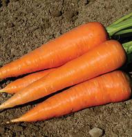Семена моркови Джерада F1 25000 семян (калиброванные 1,4 - 1,6мм.) Rijk Zwaan
